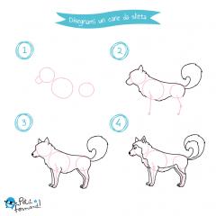 disegni da colorare cane da slitta