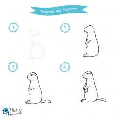 disegni da colorare marmotta