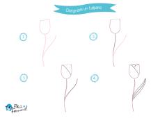 disegno tulipano